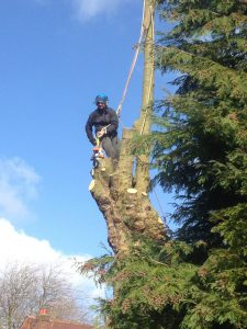 Large Tree Removal Manchester